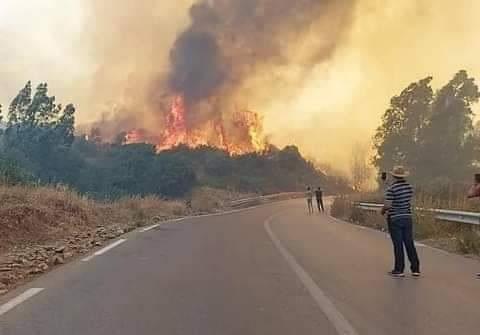 La Kabylie calcinée et détruite ?